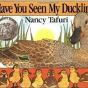 Have You Seen My Duckling? Top 25 Amazing Wordless Picture Books